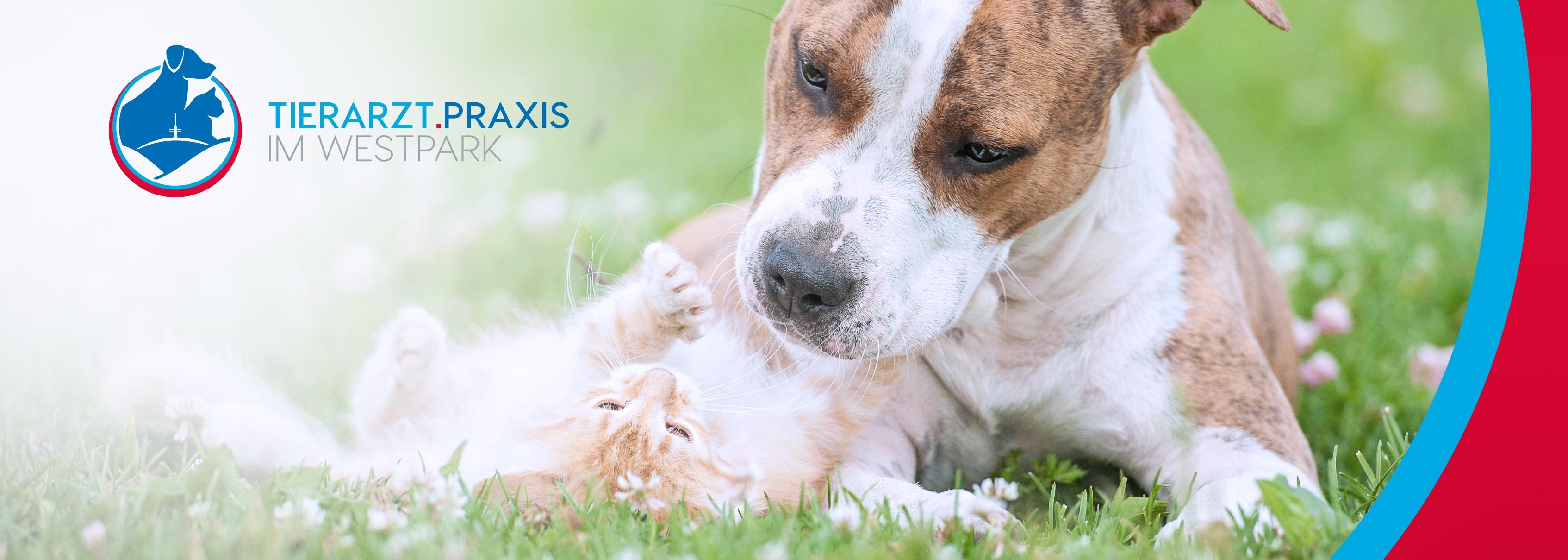 verfügung für tierarzt